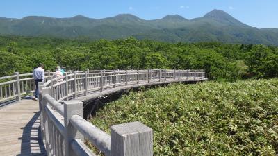 知床6月 フレペの滝・知床5湖の木道を歩く