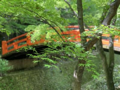 令和最初のお出かけは京都!