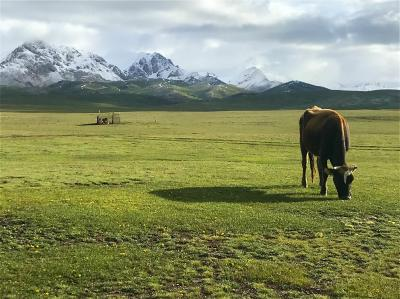 キルギスの大自然からサマルカンドの碧の世界へ、中央アジアの旅【5】遊牧民のおもてなしにウルルン!(ソンクル湖編/キルギス)