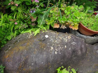お蕎麦食い放題・・・骨のヒビは骨折だと知った梅雨の終わり