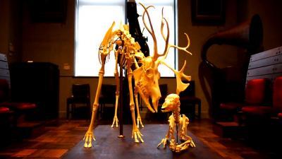 インターメディアテクと東京大学総合研究博物館 / 無料なんて申し訳ない東京大学の博物館2つ、パリのケ・ブランリ美術館や大規模家畜剥製群が