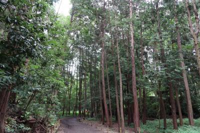 泉の森(神奈川県大和市)へ・・・