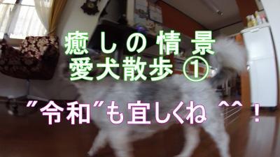 """『癒 し の 情 景』 愛犬散歩風景 ① """"令和""""も宜しくね 🐶^^!"""