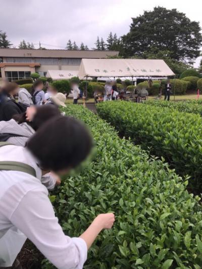 埼玉・狭山茶摘み体験フェスタ2019~茶摘みやブレンド茶体験のイベント~