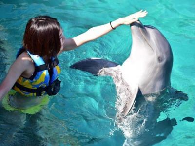 離島でイルカと泳ぐ!!