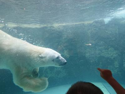 道東、道央の旅 3日目は旭川でラーメン、ジンギスカン、そして旭山動物園