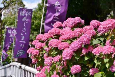 稲沢あじさいまつり&清州城を楽しむ