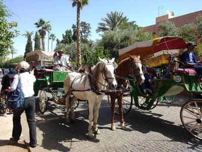 えぇ?・・・ラマダン中のモロッコ10日間 6