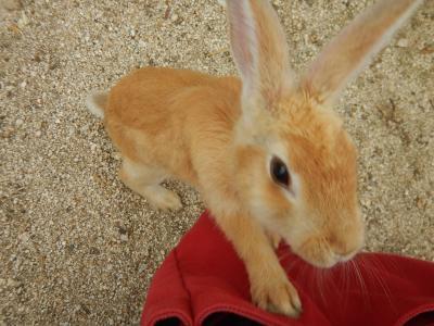 うさぎさんに会いたくて大久野島へ♪① 癒されまくりのウサギ島 休暇村大久野島泊 フェリーは大三島から