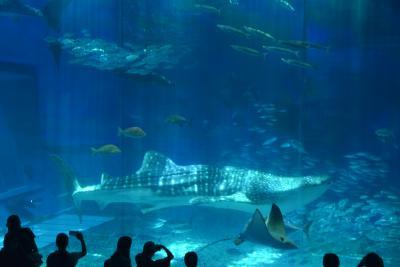 夏!!沖縄 瀬底島へ移動。美ら海水族館へ行きました。