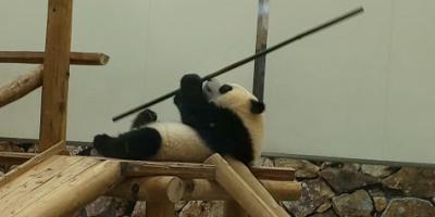 パンダに癒されて~♪