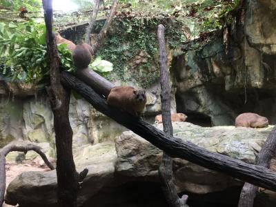 初めてのシンガポール I  -動物三昧-