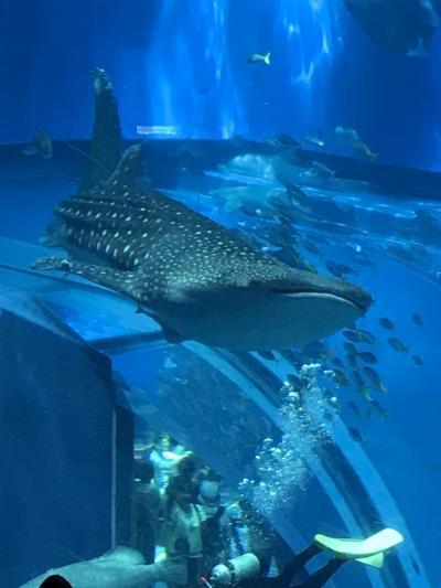 沖縄の旅 1日目 美ら海水族館、ホテル日航アリビラ 佐和