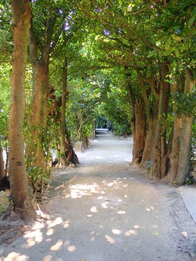 夏!!沖縄 備瀬のフクギ並木を歩きました。