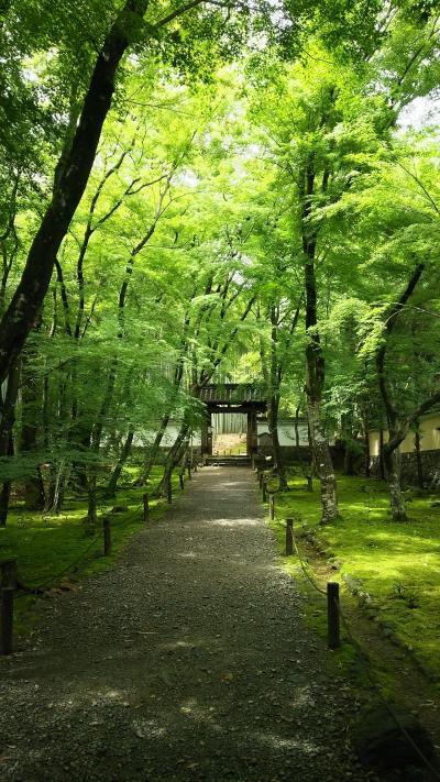 2019年令和元年の初夏 京都一泊旅行