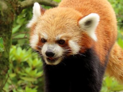 いしかわ動物園 暑い中、5匹全員に会えてよかった・・・来年こそは期待してるよ、ハル君&サンちゃん