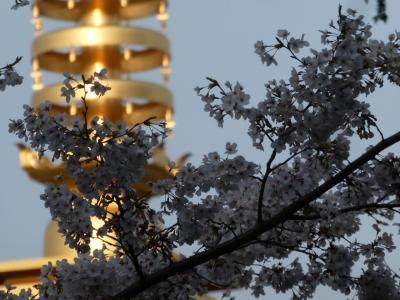 高幡不動の桜と山内八十八ヶ所巡り、逆打ち。