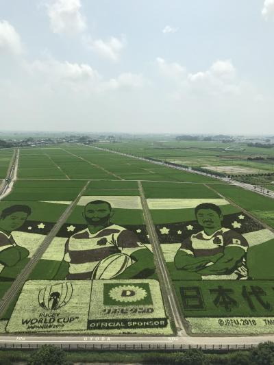 古代蓮と田圃アート