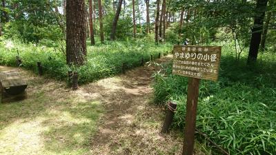 7月の国営武蔵丘陵森林公園でやまゆりを見てきました。