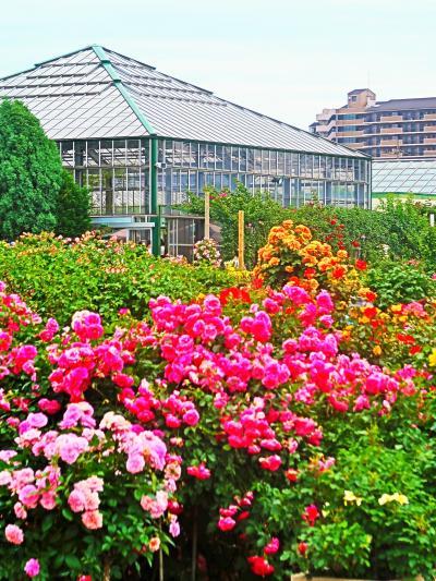 京成バラ園-3 フランス式整形庭園 ポール/アーチ・立体的に見せ ☆品種名をていねいに