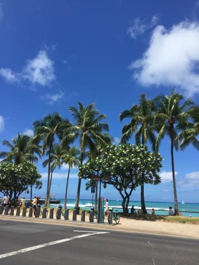 3歳児と一緒の夏Hawaii☆2日目~3日目