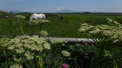 原生花園6月 オホーツクを見ながら満開のお花畑を歩く