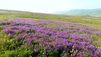 アルメニアのお花畑:セミヨノフカ峠からセヴァン湖畔を通りセリム峠へ