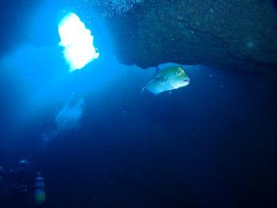 宮古島で地形ダイビングを堪能