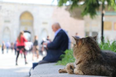 イスタンブール てくてく4days_#1