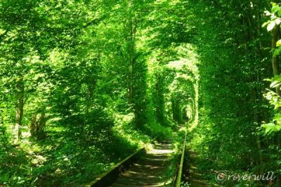 一度は見たい!ウクライナ恋人の聖地「愛のトンネル」
