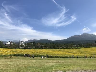 子連れ(6歳)でGo~高千穂牧場が熱すぎる!