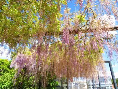 オルレアン♪入場無料の藤棚庭園では誰も花見・ドンチャン騒ぎをしていなかった2019年5月フランス ロワール地域他8泊10日(個人旅行)125