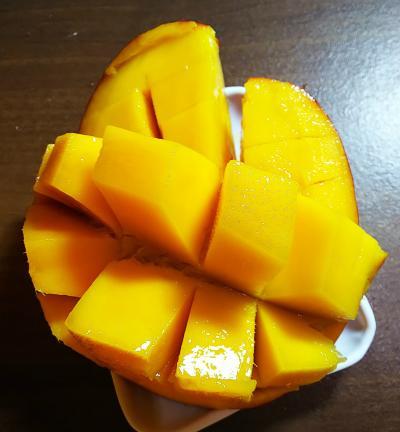 台湾オフ会参加と癒やし旅 ガチョウとにゃんこと芒果冰!やり残しは9月の宿題だーの3日目最終日