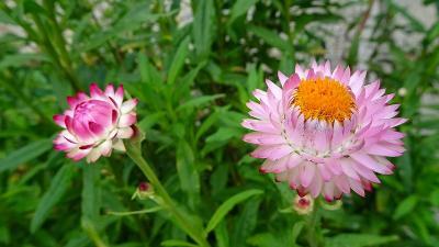 昆陽南公園に咲く花達 その4完。