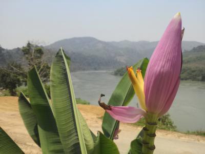 ミャンマーを臨む、どんづまりの村シェンコック…そして貨物船でメコン川下り