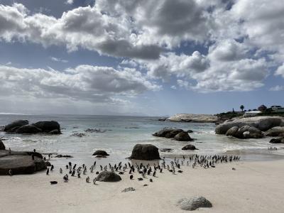 南ア便り2~ケープタウン周辺旅行・2泊3日で港町ハマナスとサファリと喜望峰とペンギン