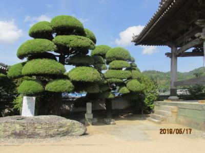 四国霊場・徳島編(31)第十六番観音寺に参詣する。