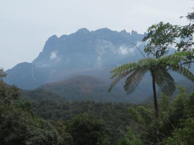 マレーシア 「行った所・見た所」 キナバル公園の植物園散策
