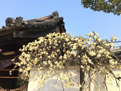 関西⑦4日目 朝の散歩・四天王寺 極楽浄土の庭