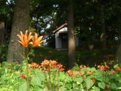「天神山古墳」のキツネノカミソリ_2019_たくさん咲いていますが、やや見頃過ぎ(群馬県・太田市)