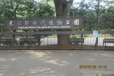 神代植物公園:猛暑日に訪れました