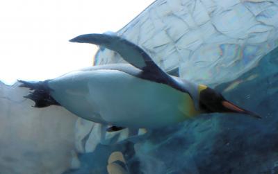 北海道家族旅行・・日本最北の動物園、行動展示の旭山動物園の紹介です。