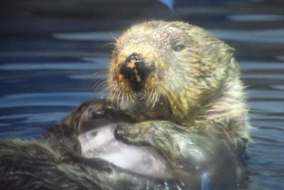 GW明けの石川県で動物たちに会ってきたお話 5 のとじま水族館の部