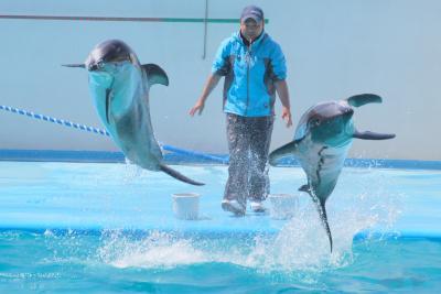 GW明けの石川県で動物たちに会ってきたお話 6 のとじま水族館と帰宅の部