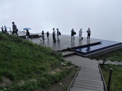 雲上のびわ湖テラス~花の伊吹山へ!