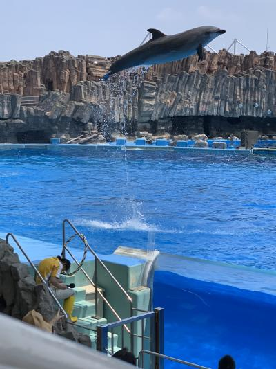 夏休みにぴったり!名古屋港水族館!