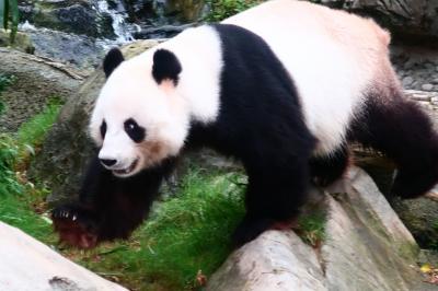香港★ペンギンさんやパンダさんに会いに! ~香港海洋公園~