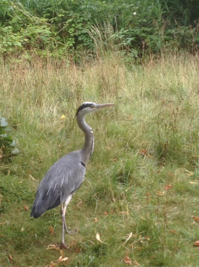 ロンドンを歩く。(3.1) 今日のアサイチはRegent's Park。早朝からあいているのは公園です。