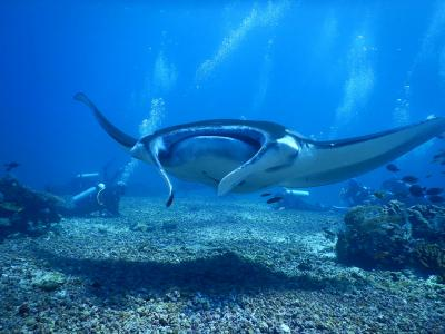 世界遺産コモドの海でのアドバンスダイバー講習
