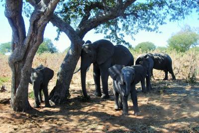 アフリカ南部へ。⑩ボツワナ共和国チョベ国立公園でドライブサファリ! その2